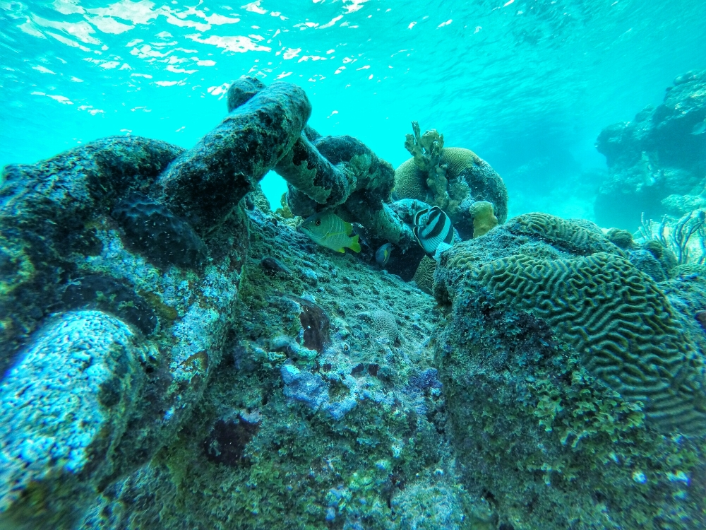 beautiful corals curacao